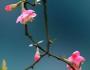 等待花开 静待花开的励志语句