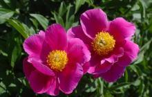形容花香引蜂的诗句